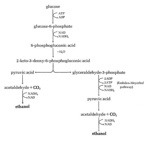 propionate vs polycarbonate