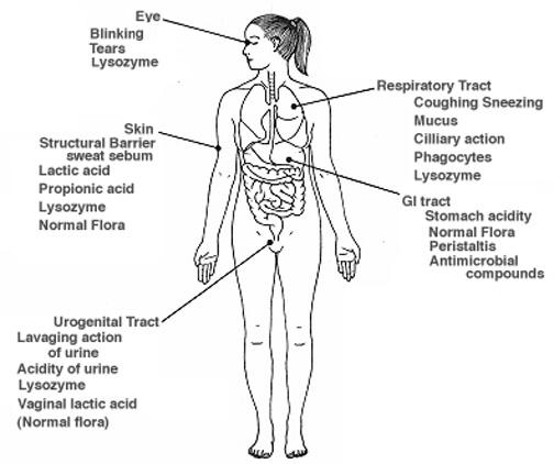 define corticosteroids drugs