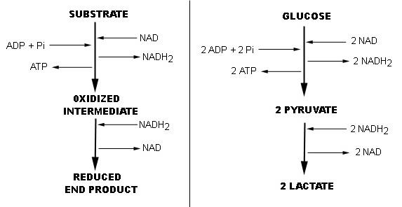 propionate methanogenesis