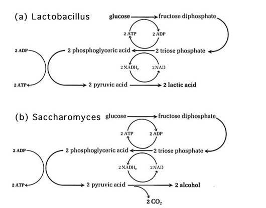 propionate at end of cycle