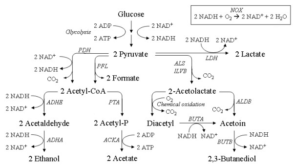 The pyruvate metabolism of Lactococcus lactis. LDH: lactate dehydrogenase