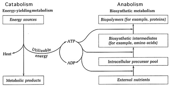 Diversity of Microbial Metabolism