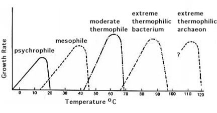 what is the ideal temperature range for bacterial growth? este ușor să scoți acești viermi